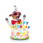 jack russell dog as a surprise singing birthday song behind funny cake wearing red tie and party hat isolated on white background